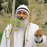 Are politicians eyeing Osho's R 1,000 crore property in Pune?